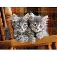 PUZZLE 500 KITTENS